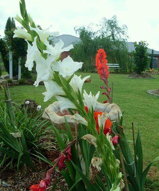 The gardens 261108 034