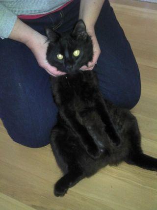 Theo ninja cat