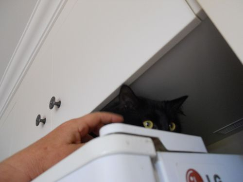 On the fridge (7)