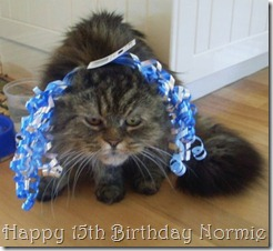 Norm's ready to party